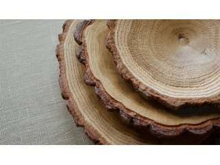 Мебель из массива какого дерева лучше?